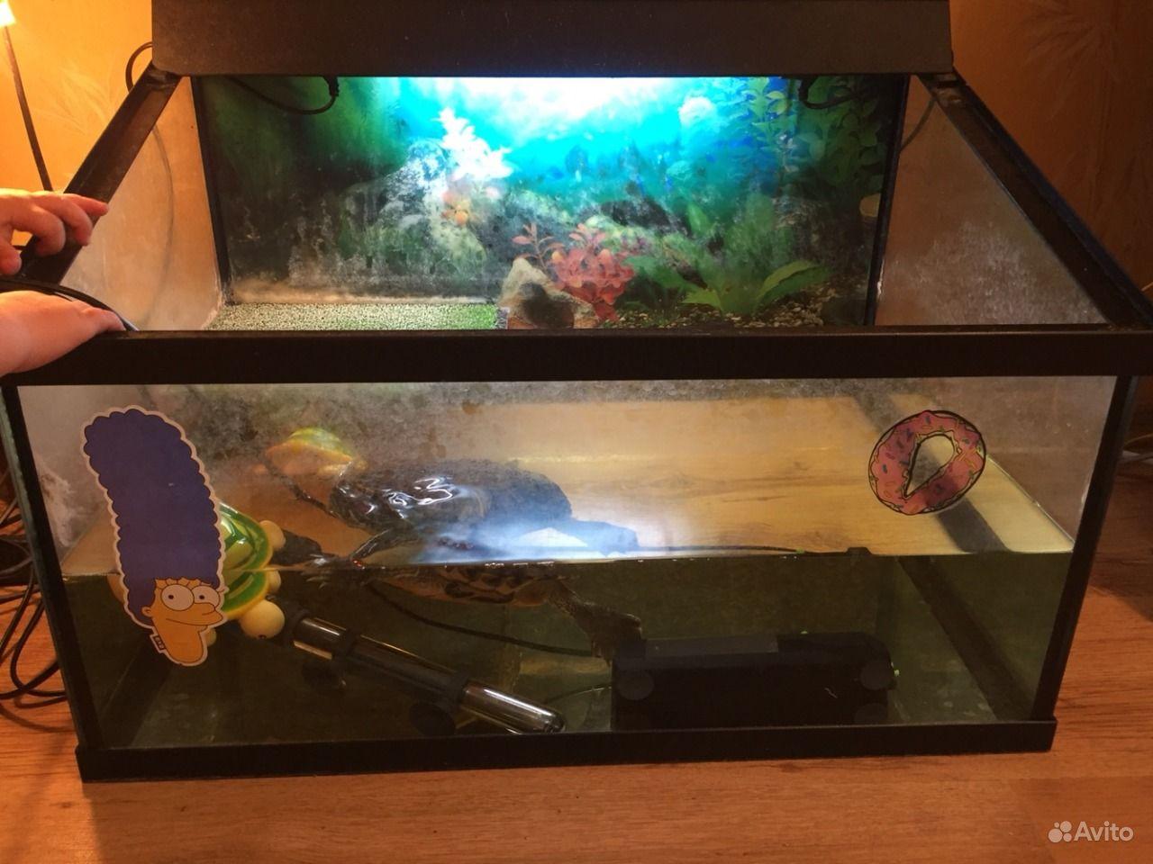 Аквариум для красноухой черепахи. Способы изготовления и обустройства 28