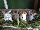 Кролики 1 месяц