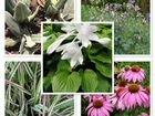 Многолетние растения и цветы