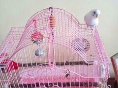 Волнистый попугайчик.Девочка.с клеткой и кормом