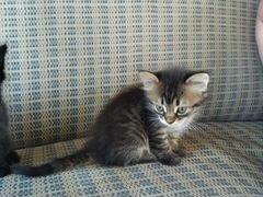 Котята от доброй ласковой кошечки