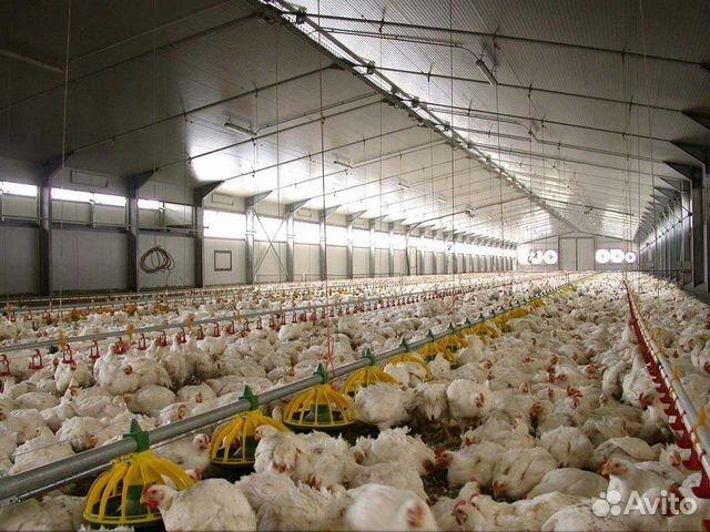 ДТП мегастроя где купить цыплят бройлеров в карелии словами, это