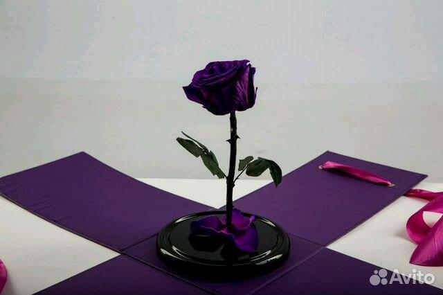 Купить цветы на авито брянск купить тюльпаны томске