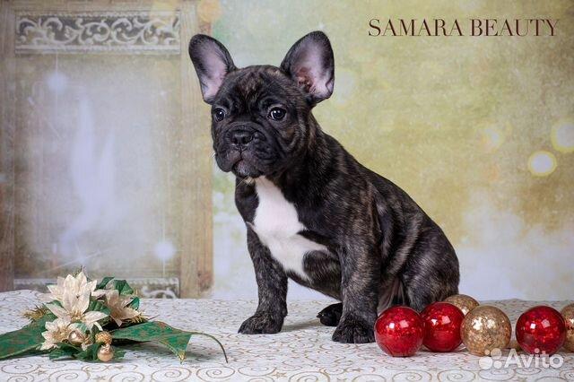 Собаки купить на Зозу.ру - фотография № 1
