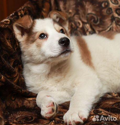 Белый медвежонок Беня в дар купить на Зозу.ру - фотография № 4