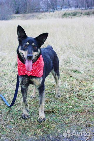 Собака в дар, в добрые руки купить на Зозу.ру - фотография № 1