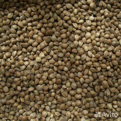 Купить семена конопли челябинск бумагу делать из конопли