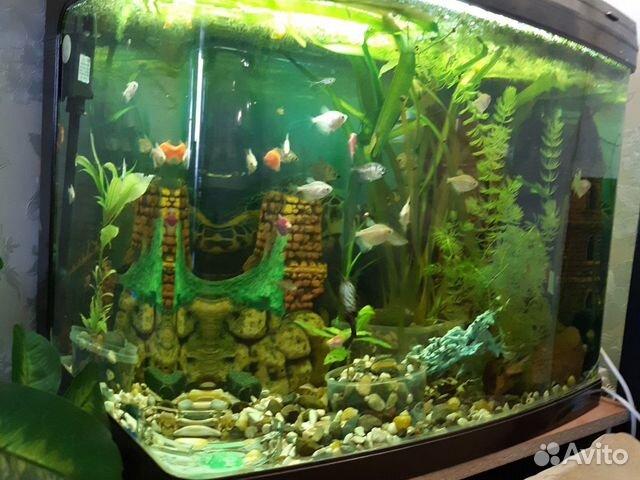 Импортный аквариум