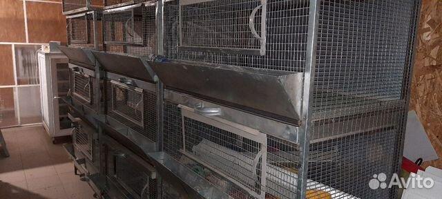 Клетки для птенцов 89171391861 купить 2