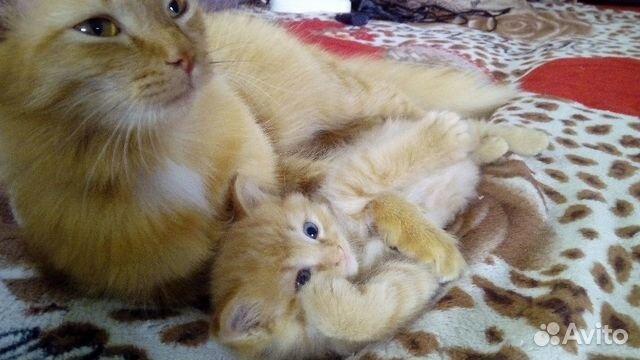 Кошечка в добрый дом купить 3