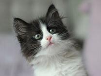 Очаровательные котята Макс и Лиза в дар