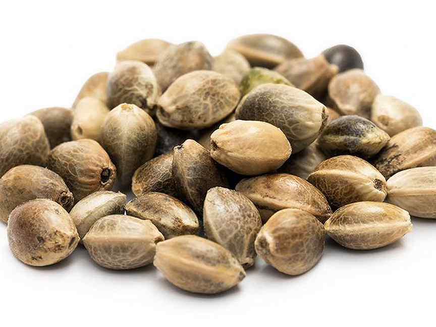 Конопляные семена хабаровск клонирование растений марихуана