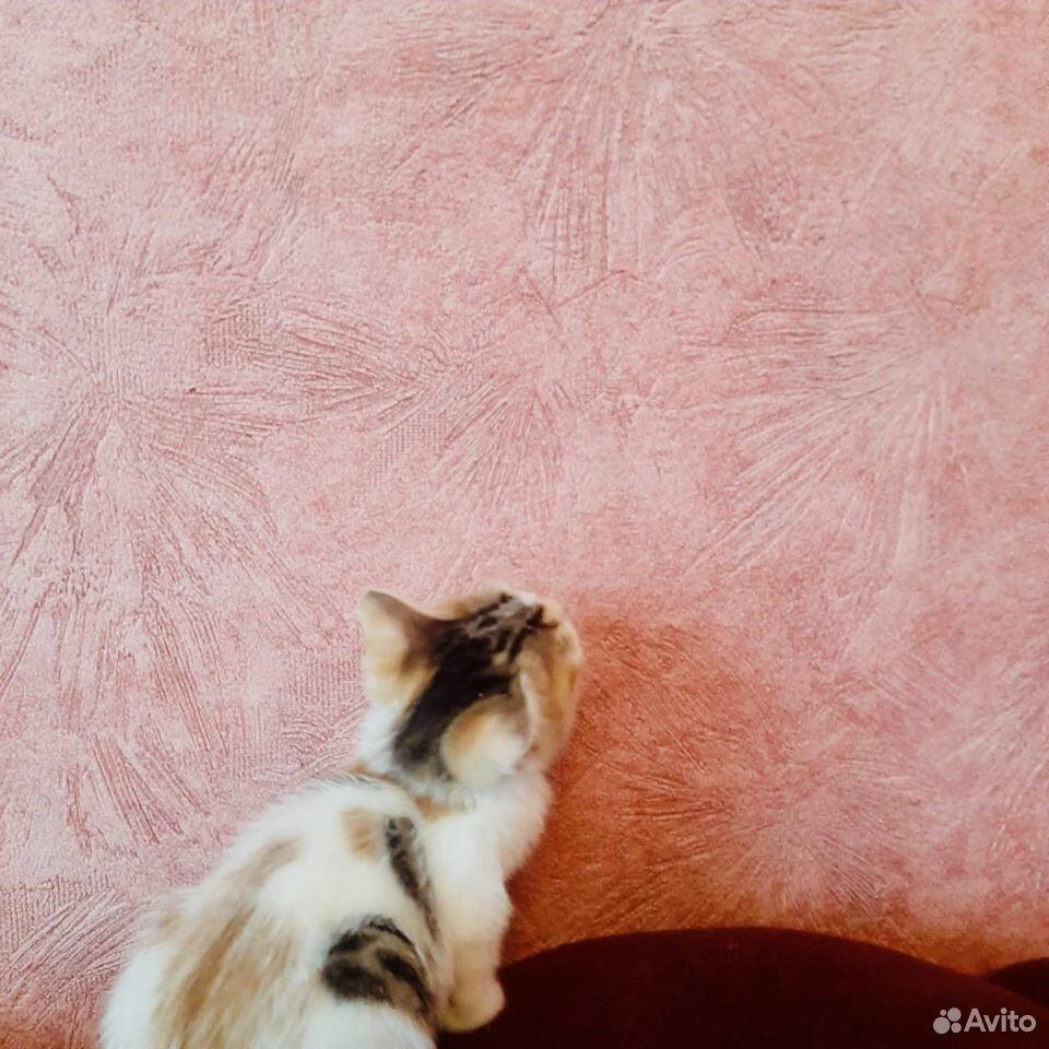 Give kitten in good hands  89379140006 buy 2