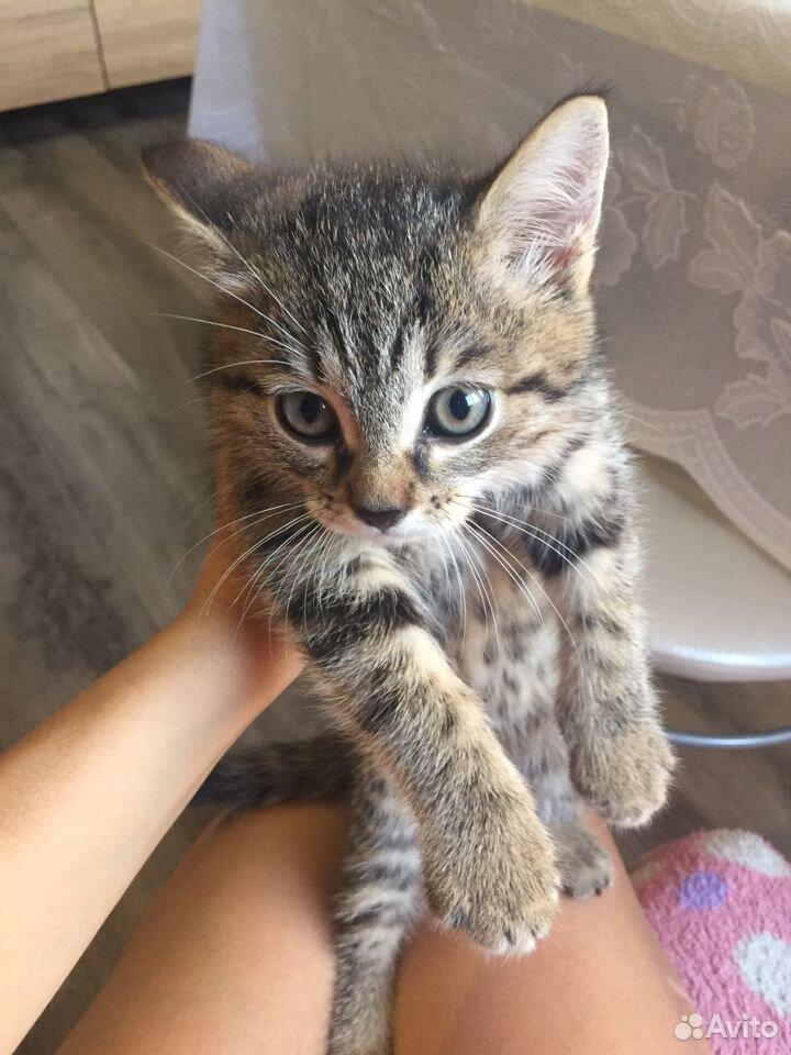 Kitty  89222627556 buy 1