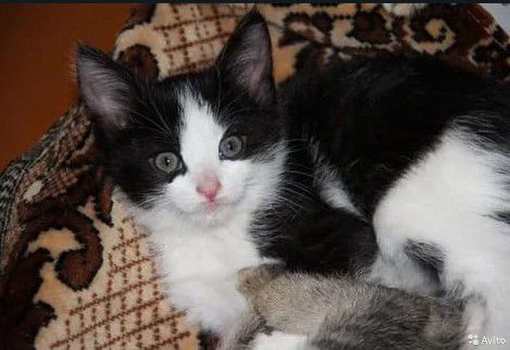 Котенок в хорошие и добрые руки  89163691460 купить 3