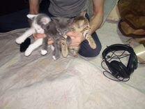 Кошки бесплатные
