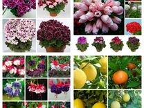 Комнатные цветы - в Тепличном хозяйстве