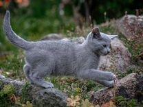Отдам котика(4 месяца) красивого окраса