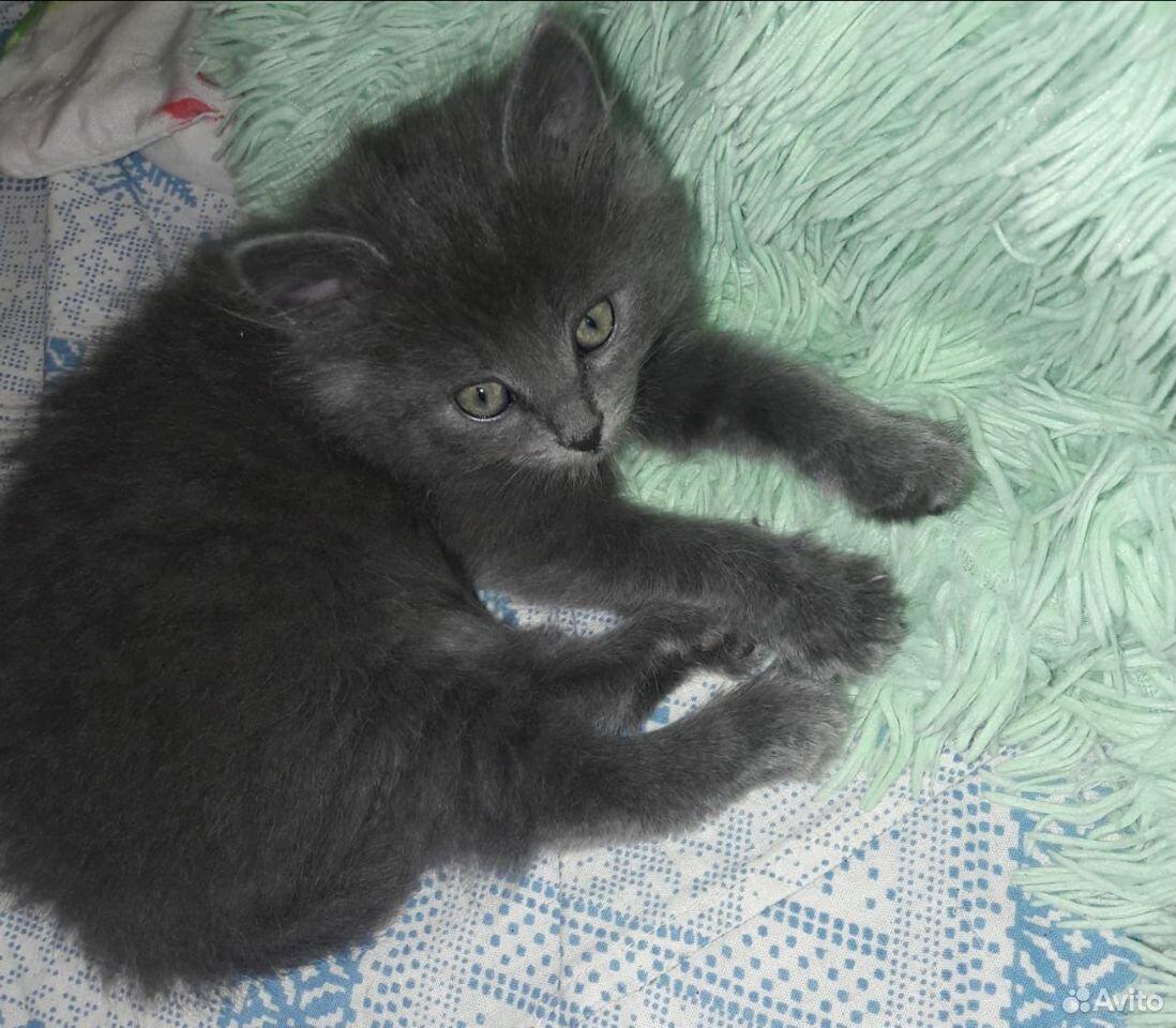 Кошка  89208680728 купить 4