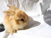 Кролик - Кролики