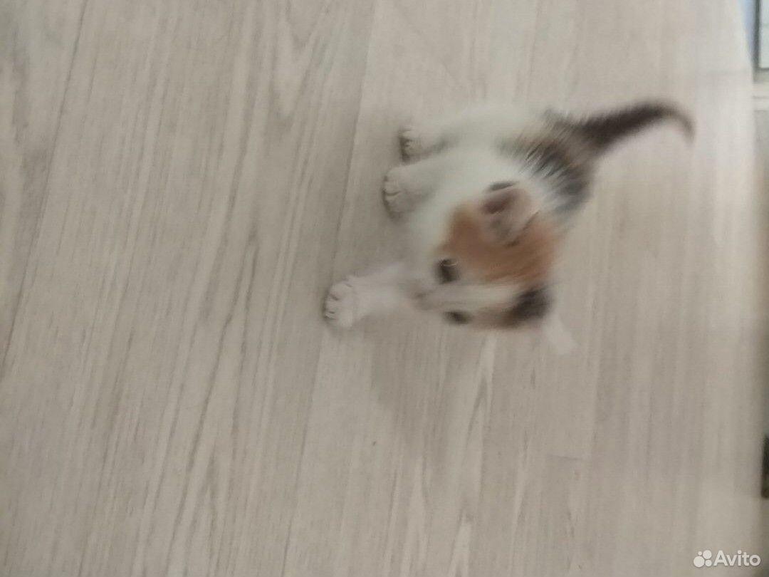 Котенок, девочка  89179691675 купить 3